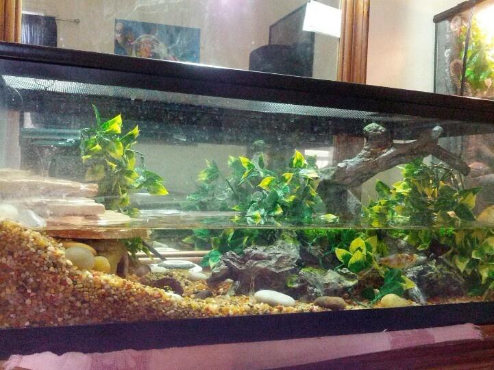 аквариум для тритона2
